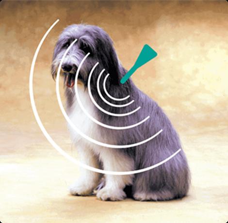 dog diagram