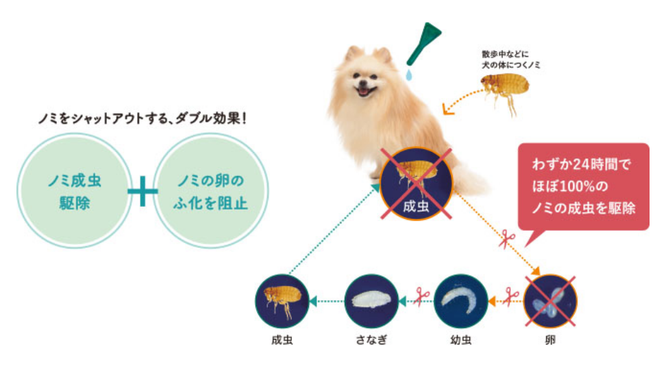 insect & dog diagram